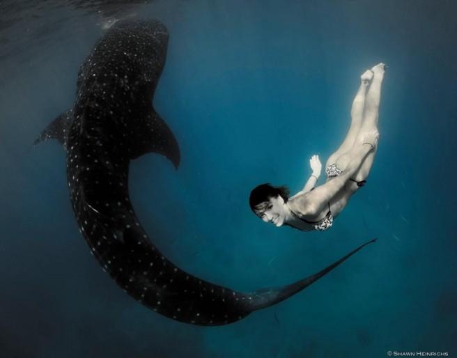 roberta-mancino-requinbaleine-bikini