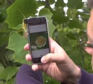 Pl@ntNet-Shazam-pour-tout-savoir-sur-les-fleurs-plantes-high-tech-application-apple-google-effronte-012